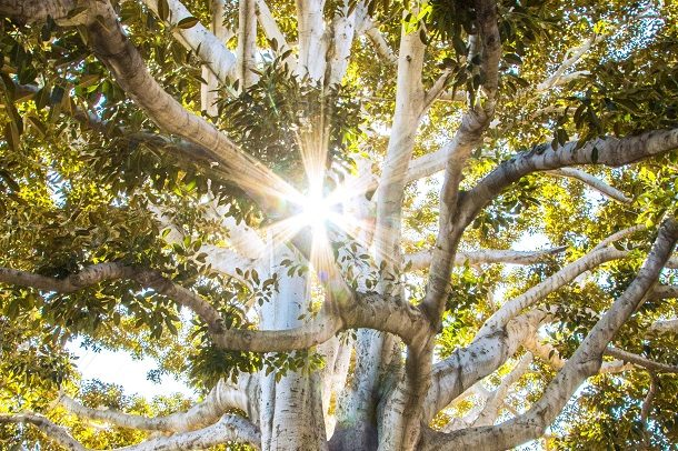 Light coming through tree.